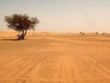 En nuestros desiertos habla el Señor – 2º Domingo de Adviento.