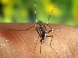 Zika: De 13 partos de mujeres infectadas, ninguno de los bebés nació con microcefalia