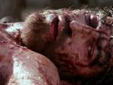 Homilía de Viernes Santo